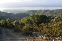 Battue Sangliers dans l'Aude