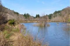Perdrix Faisans en Haute Loire