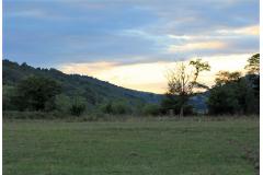 Battue Cervidés et Sangliers en Occitannie