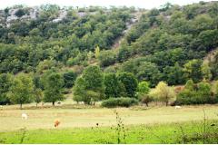 Battue Sangliers en Occitannie