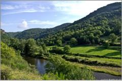Battue Cervidés et Sangliers en Haute Loire