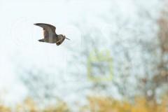 Une semaine de chasse à la bécasse en Dordogne
