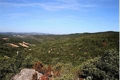 Bécasse dans l'Aude