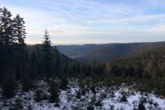 Battue Grands Gibiers dans les Vosges