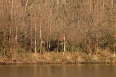Battue Sangliers en Haute Saône