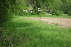 Lapins dans la Loire