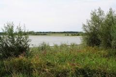 Perdrix Faisans dans l'Indre et Loire