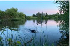 Chasse aux Canards en Loire Atlantique