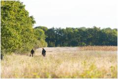 Perdrix Faisans en Indre et Loire